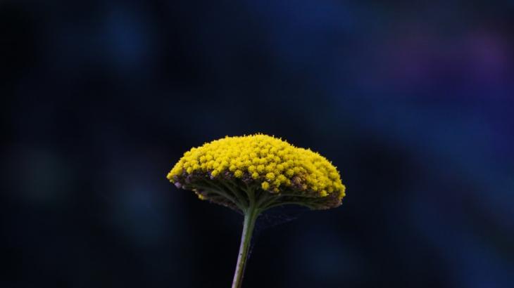 香川県における2020年の花粉の規模は?花粉症対策やセルフケアなども解説